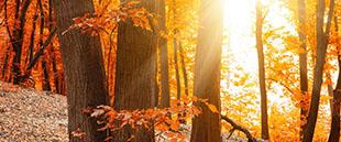 Nyd den danske natur og efteråret i de mange danske skove
