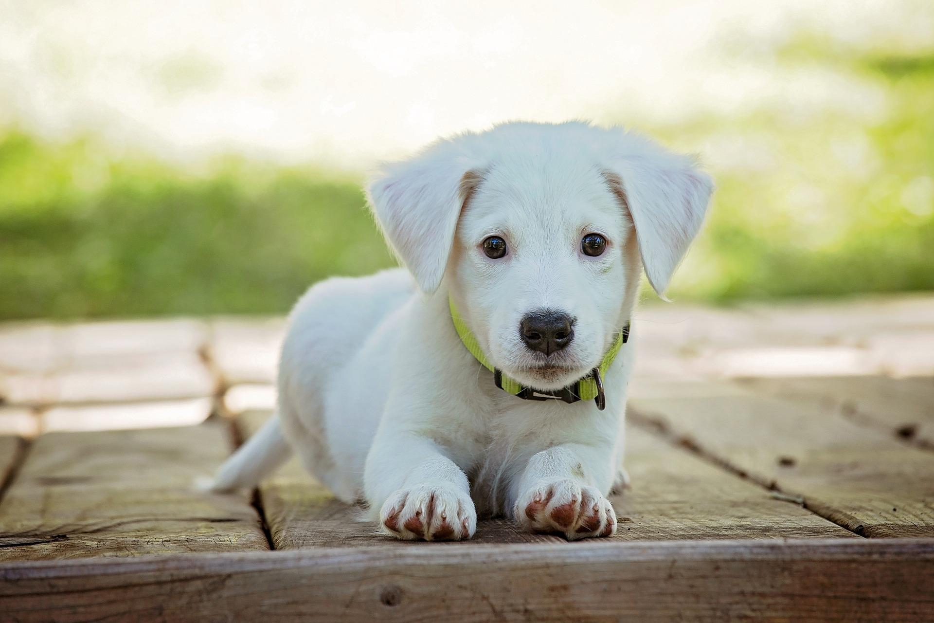 Tre gode råd til, hvordan du vænner din hund til buret i bilen